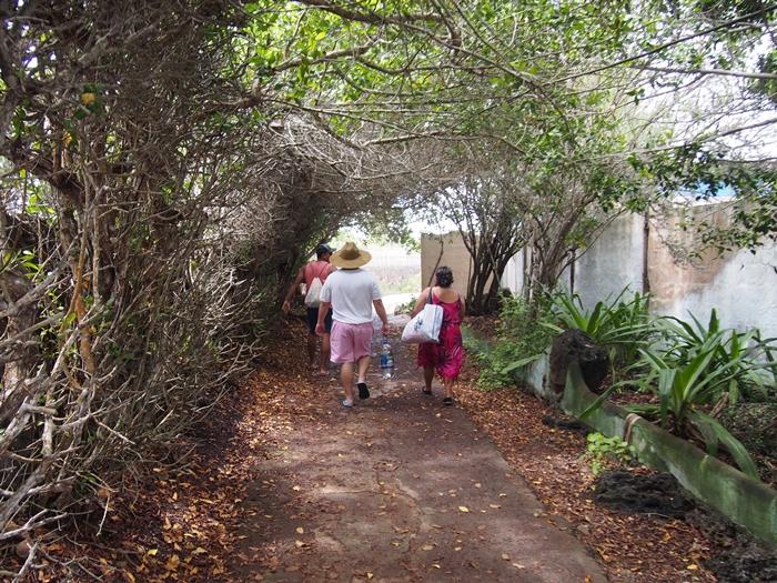 【エクアドル03】世界でここだけ!イグアナと泳げるビーチ。ガラパゴスPart2(サンタクルス島) (20)