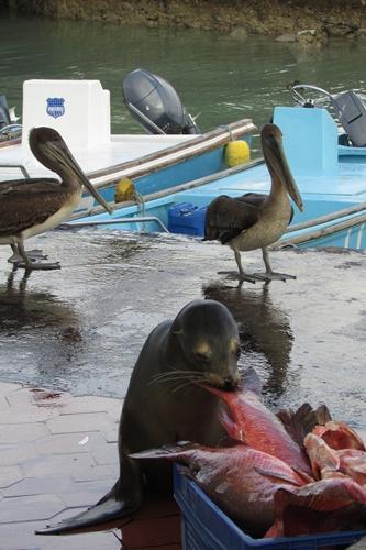 【エクアドル02】ゾウガメ!イグアナ!アシカ!ガラパゴスPart1(サンタクルス島) (44)