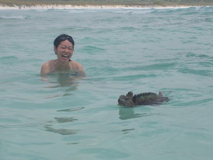 【エクアドル03】世界でここだけ!イグアナと泳げるビーチ。ガラパゴスPart2(サンタクルス島) (5)