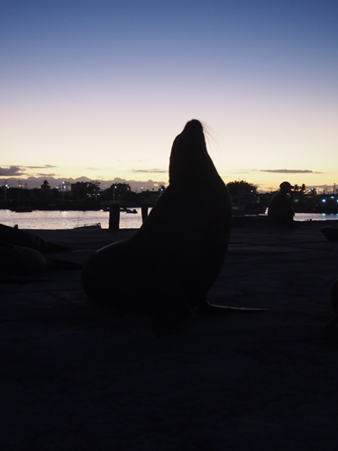 【エクアドル05】アシカに首ったけ!ガラパゴスPart4(サンクリストバル島) (26)