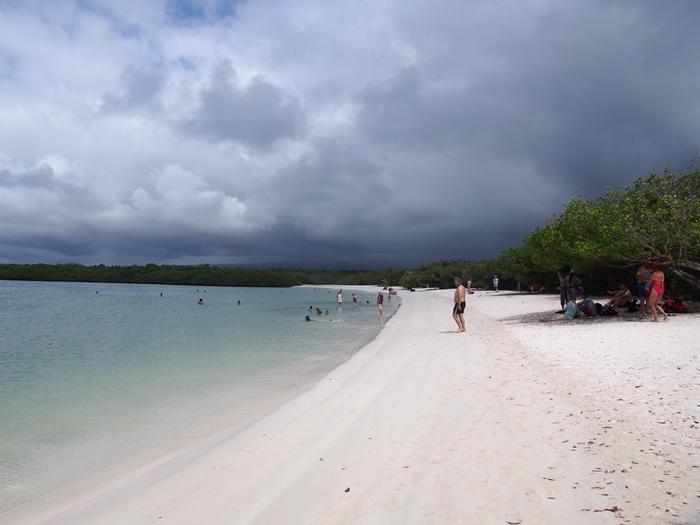 【エクアドル03】世界でここだけ!イグアナと泳げるビーチ。ガラパゴスPart2(サンタクルス島) (48)
