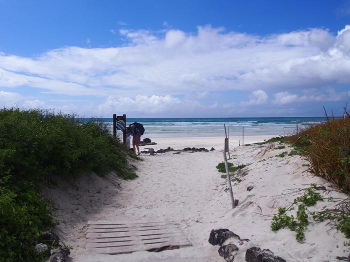 【エクアドル03】世界でここだけ!イグアナと泳げるビーチ。ガラパゴスPart2(サンタクルス島) (38)