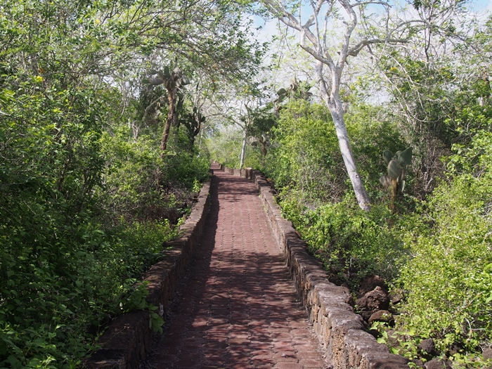 【エクアドル03】世界でここだけ!イグアナと泳げるビーチ。ガラパゴスPart2(サンタクルス島) (37)