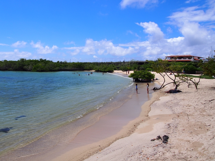 【エクアドル03】世界でここだけ!イグアナと泳げるビーチ。ガラパゴスPart2(サンタクルス島) (21)