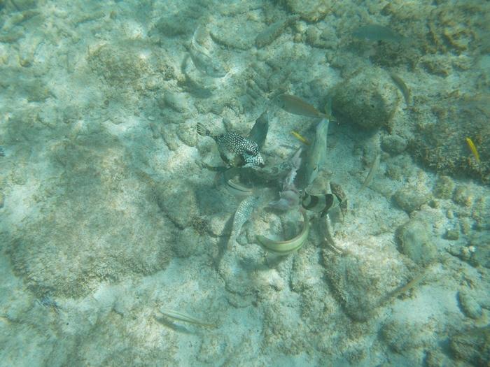 【キュラソー02】オランダの香り漂うカリブ海ビーチ!マンボ・ビーチとプラヤ・ラグーン (7)