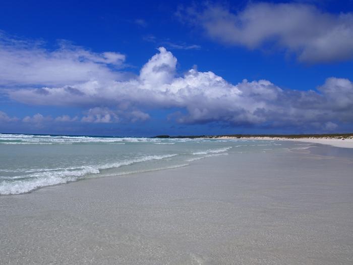 【エクアドル03】世界でここだけ!イグアナと泳げるビーチ。ガラパゴスPart2(サンタクルス島) (41)