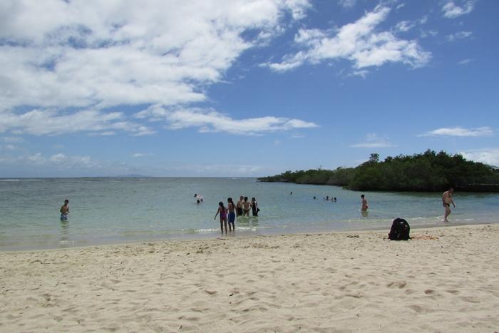 【エクアドル03】世界でここだけ!イグアナと泳げるビーチ。ガラパゴスPart2(サンタクルス島) (14)