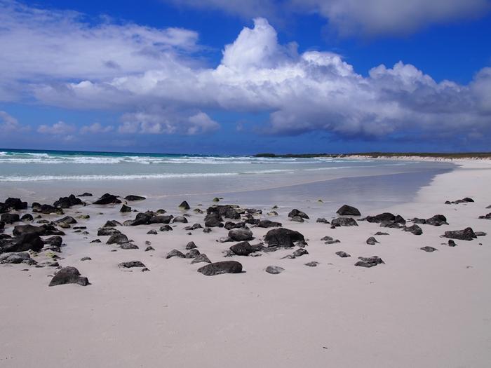 【エクアドル03】世界でここだけ!イグアナと泳げるビーチ。ガラパゴスPart2(サンタクルス島) (40)