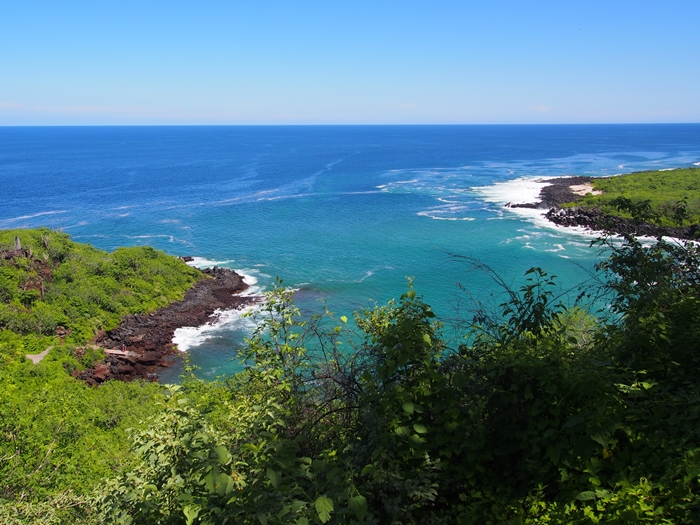 【エクアドル05】アシカに首ったけ!ガラパゴスPart4(サンクリストバル島) (42)