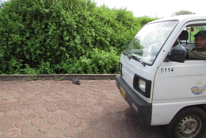 【エクアドル02】ゾウガメ!イグアナ!アシカ!ガラパゴスPart1(サンタクルス島) (8)
