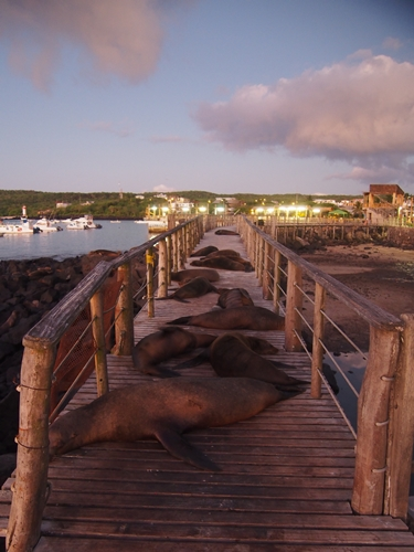 【エクアドル05】アシカに首ったけ!ガラパゴスPart4(サンクリストバル島) (25)