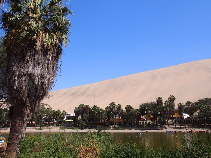 【ペルー12】ペルーにある砂漠のオアシス?ワカチナ (5)