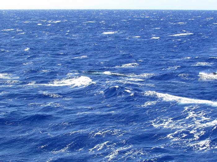 【ハワイ05】オアフでホエールウオッチング・ツアーに参加!ちゃんとクジラが見れました♪ (6)