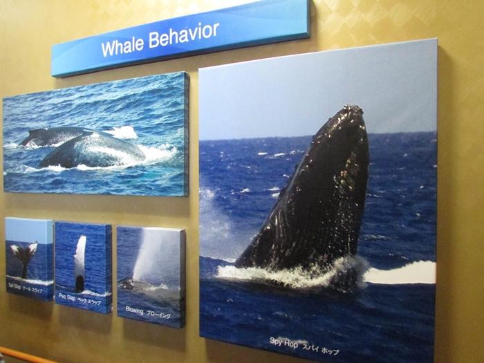 【ハワイ05】オアフでホエールウオッチング・ツアーに参加!ちゃんとクジラが見れました♪ (9)