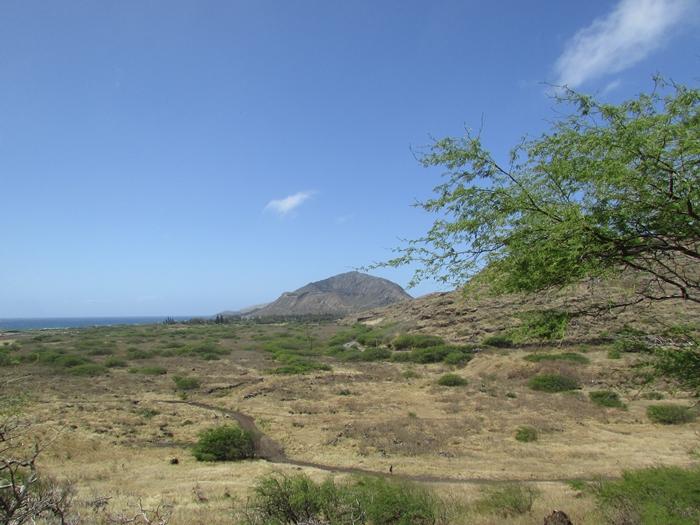 【ハワイ06】レンタカーでオアフ半周ドライブ!ハロナ、カイルアからラニアケア、ハレイワまで。 (4)