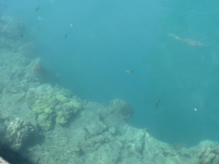 【ハワイ05】オアフでホエールウオッチング・ツアーに参加!ちゃんとクジラが見れました♪ (11)