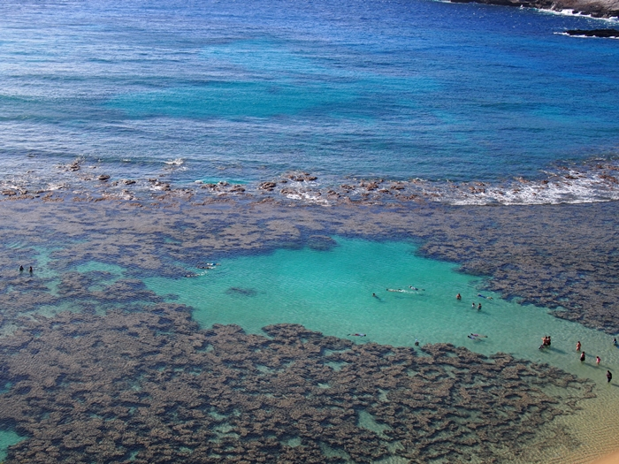 【ハワイ02】The Busで行くオアフ島随一のシュノーケリングスポット・ハナウマ湾! (7)