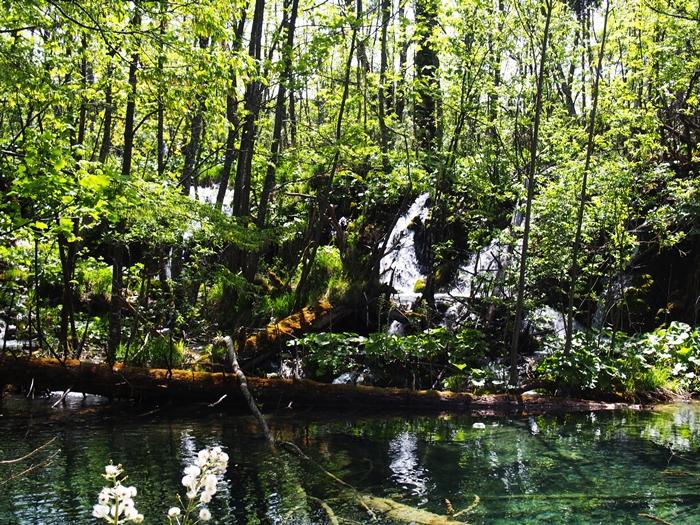 【クロアチア03】青と緑の美しいコントラスト。。世界遺産プリトヴィッツェ湖群国立公園 (9)