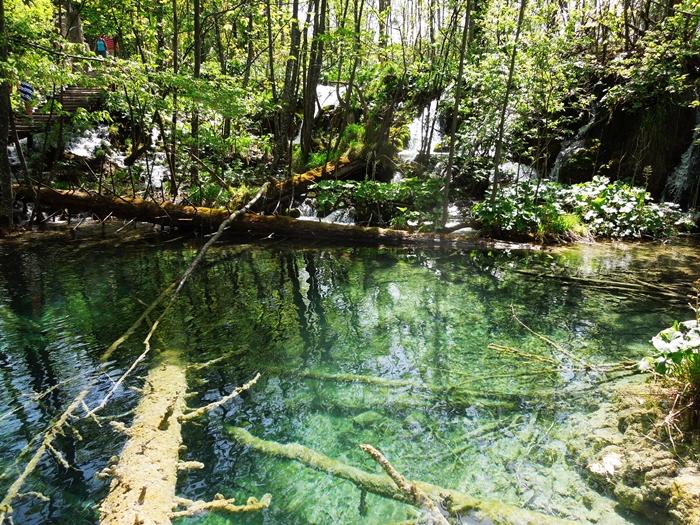 【クロアチア03】青と緑の美しいコントラスト。。世界遺産プリトヴィッツェ湖群国立公園 (1)