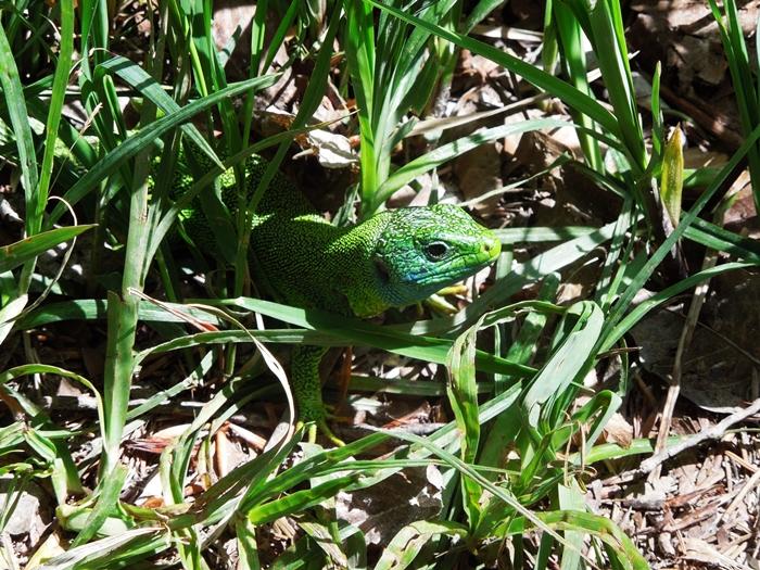 【クロアチア03】青と緑の美しいコントラスト。。世界遺産プリトヴィッツェ湖群国立公園 (3)