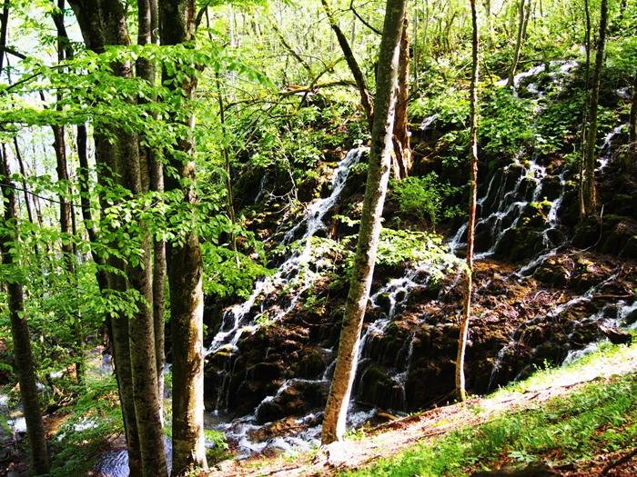 【クロアチア03】青と緑の美しいコントラスト。。世界遺産プリトヴィッツェ湖群国立公園 (25)