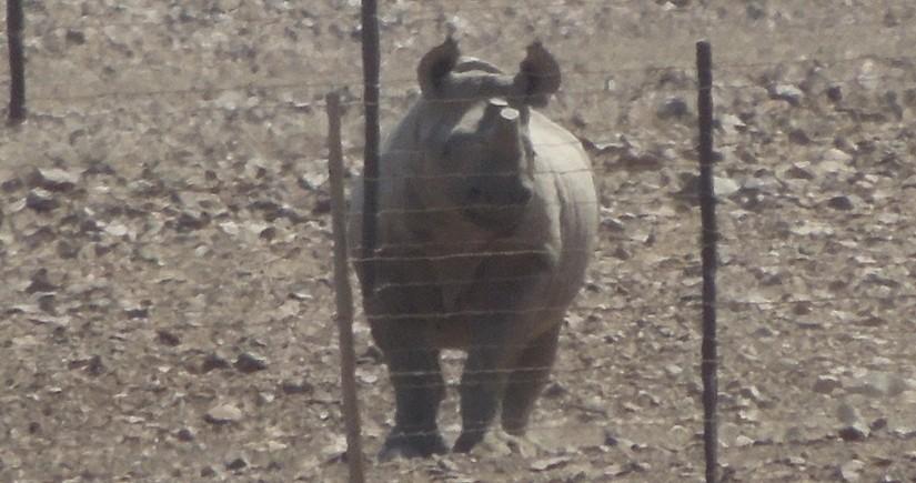 【ナミビア04】ナミビアレンタカーの旅 Part3 ヒンバ族のいる町・オプウォへの道