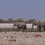 【ナミビア06】ナミビアレンタカーの旅 Part5 エトーシャでゲームドライブ!