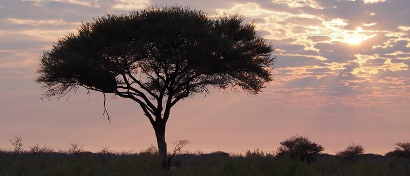 【ナミビア07】ナミビアレンタカーの旅 Part6エトーシャからウィントフックへ