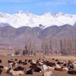 【キルギス08】冬のイシククル湖へ!~チョルポン・アタの町より~