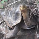 【エクアドル02】ゾウガメ!イグアナ!アシカ!ガラパゴスPart1(サンタクルス島)