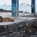 【エクアドル04】プエルト・アヨラ/サンタクルス島の宿、レストラン、移動情報などあれこれ ガラパゴスPart3
